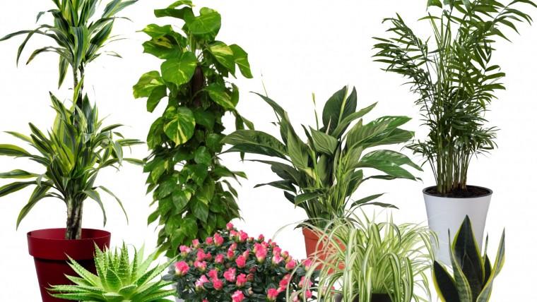 Top 15 légtiszító növény